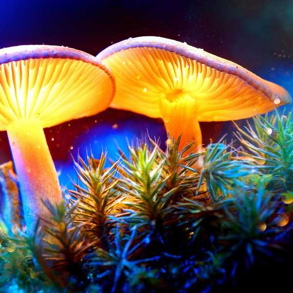 The Steve Irwin of Mushrooms: Paul Stamets Works to Save Rare Ancient Fungus to Protect Us From Pandemics
